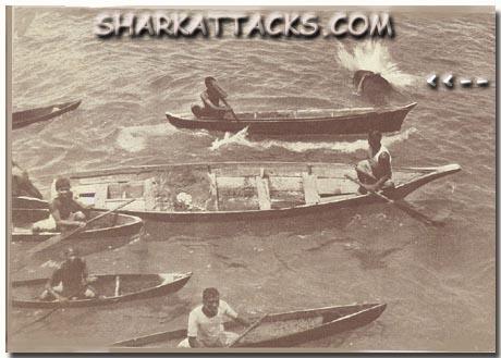shark attack bites